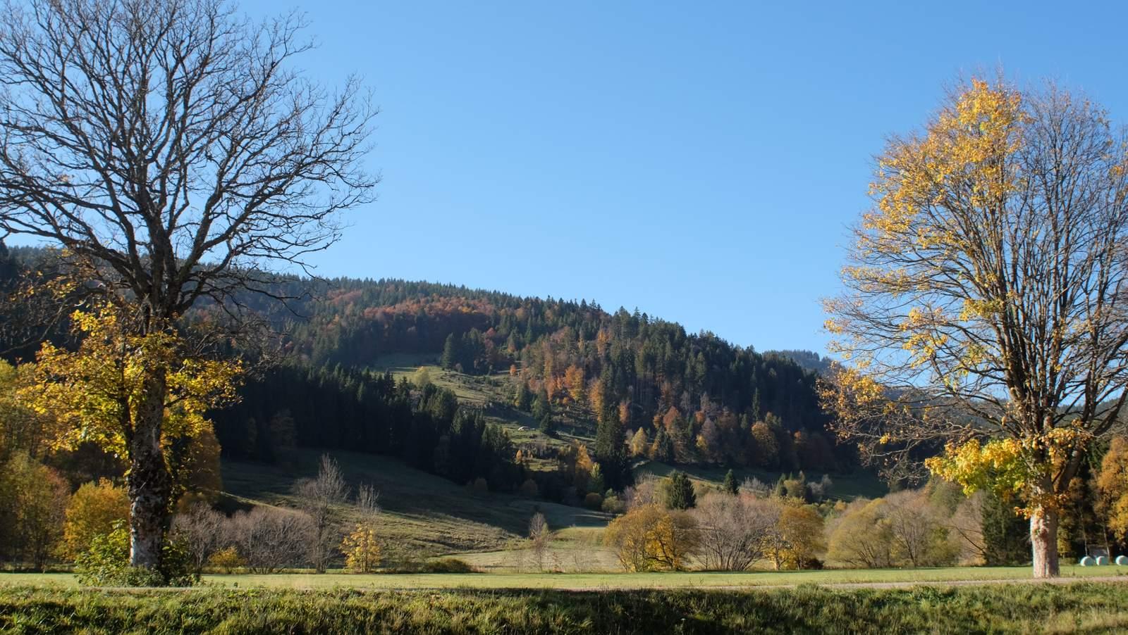 Menzenschwand ferienwohnung im schwarzwald for Ferienwohnung im schwarzwald
