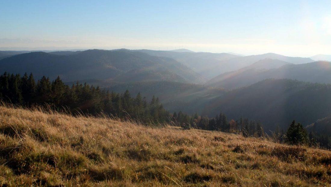 Urlaub im schwarzwald ferienwohnung in menzenschwand for Ferienwohnung im schwarzwald